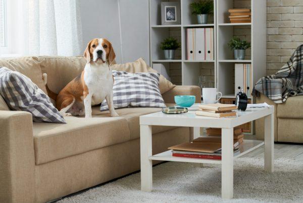 Arredare casa con animali: i consigli